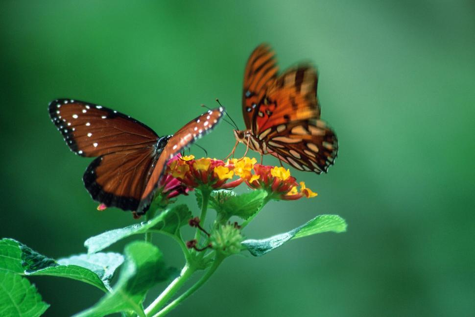 Download Free Stock HD Photo of Butterfly Place at Bronx Zoo Online