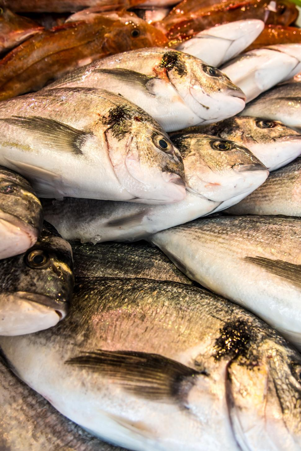 Download Free Stock HD Photo of Fresh fishes in a market Online