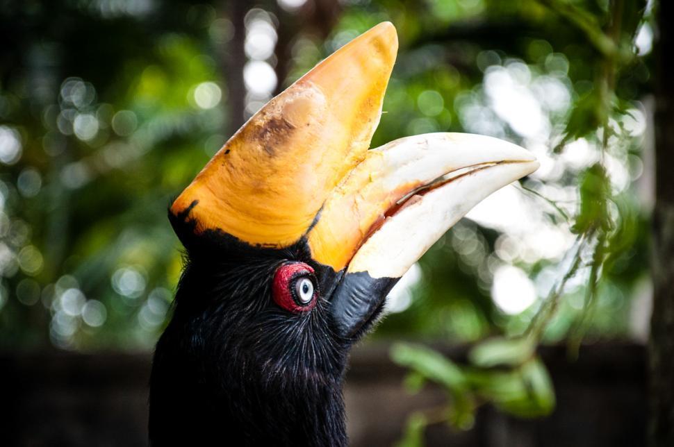 Download Free Stock HD Photo of Rhinocerous hornbill bird Online