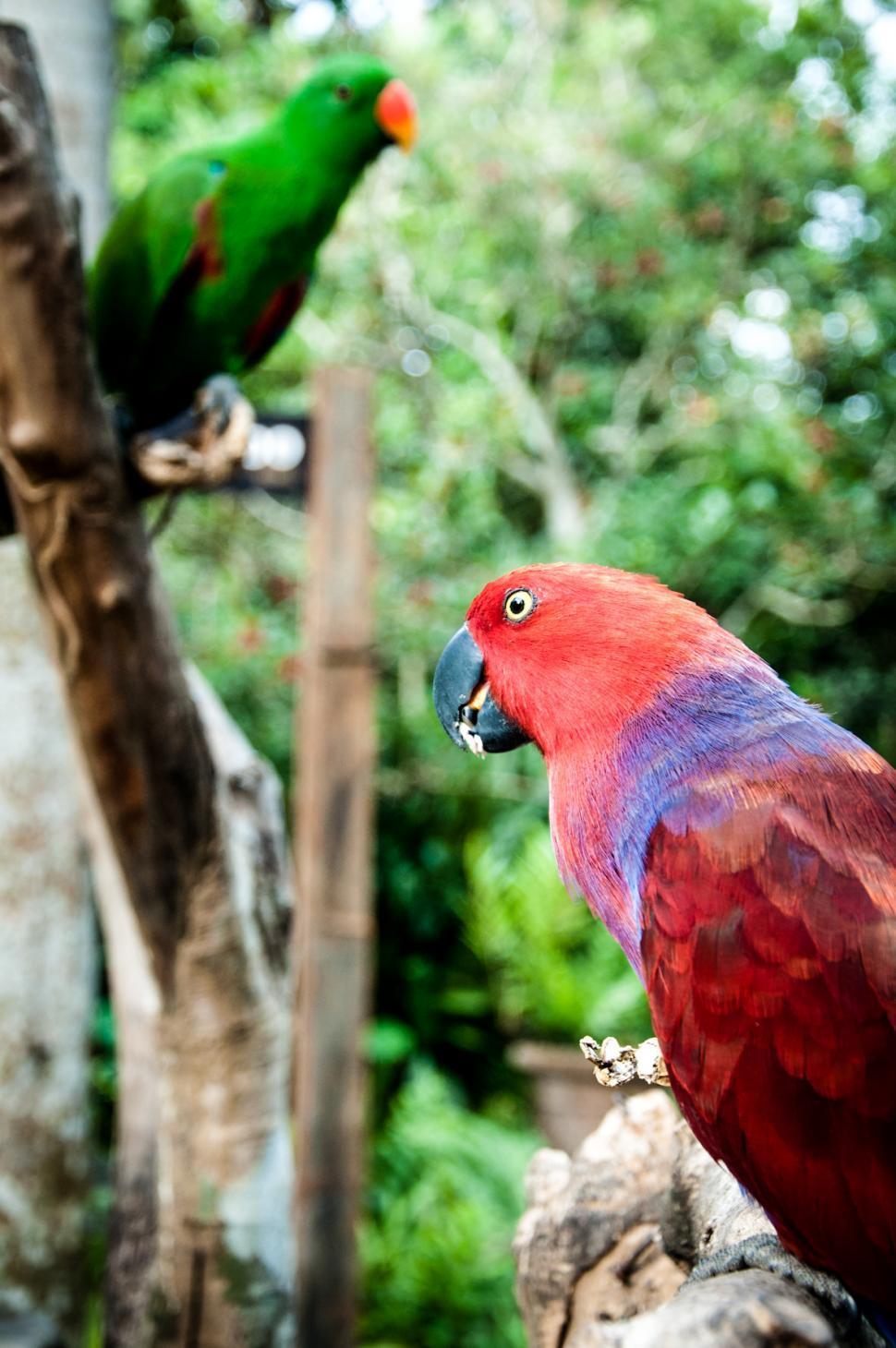 Download Free Stock HD Photo of parrot bird Online