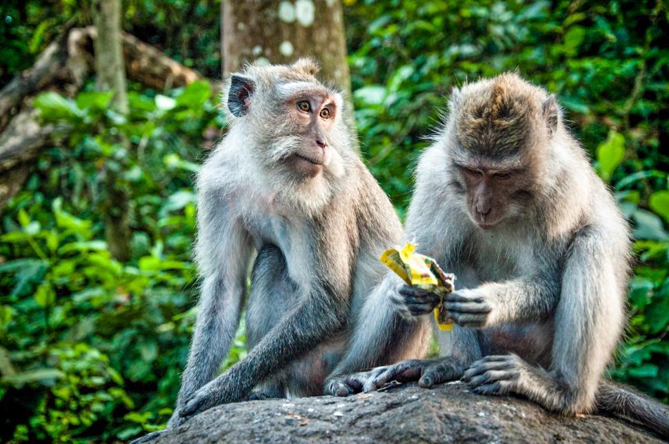 Download Free Stock HD Photo of monkeys Online