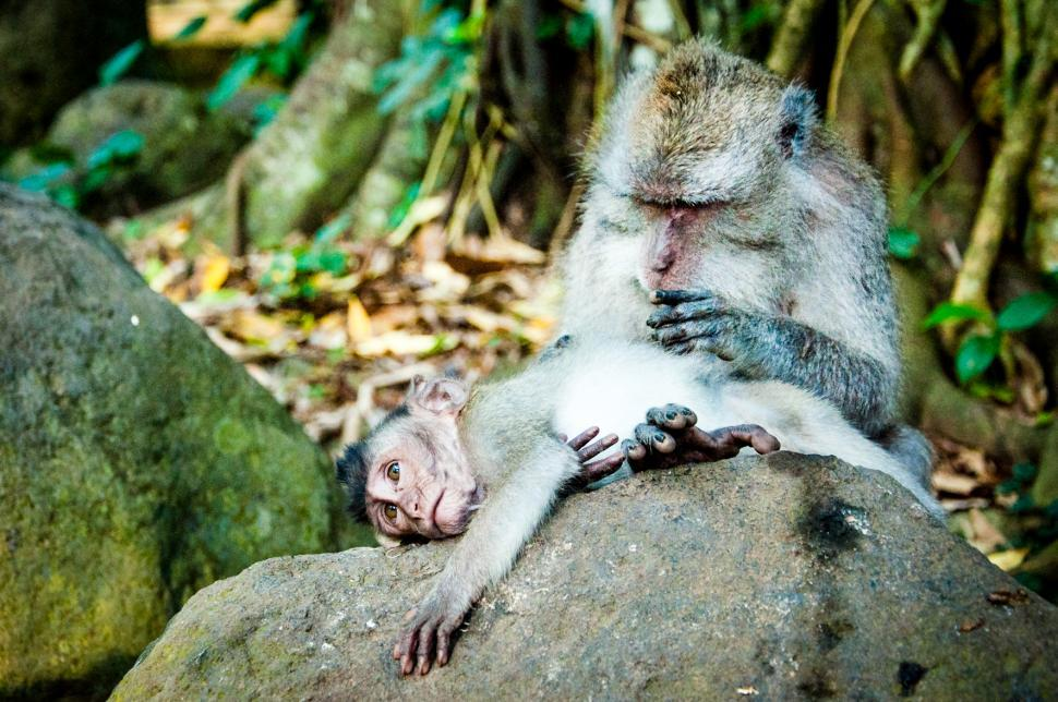 Download Free Stock HD Photo of monkey and baby Online