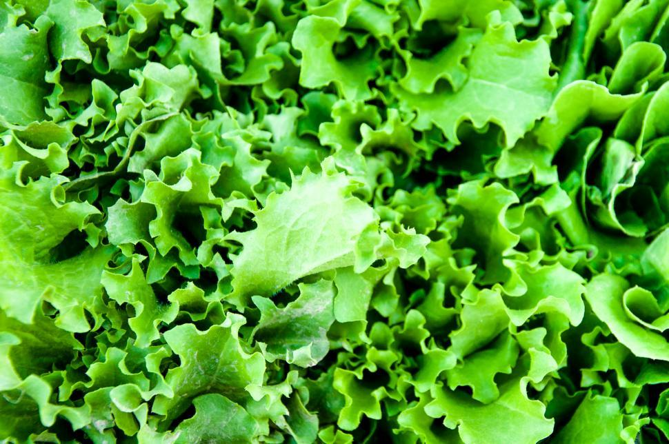 Download Free Stock HD Photo of Green salad Online