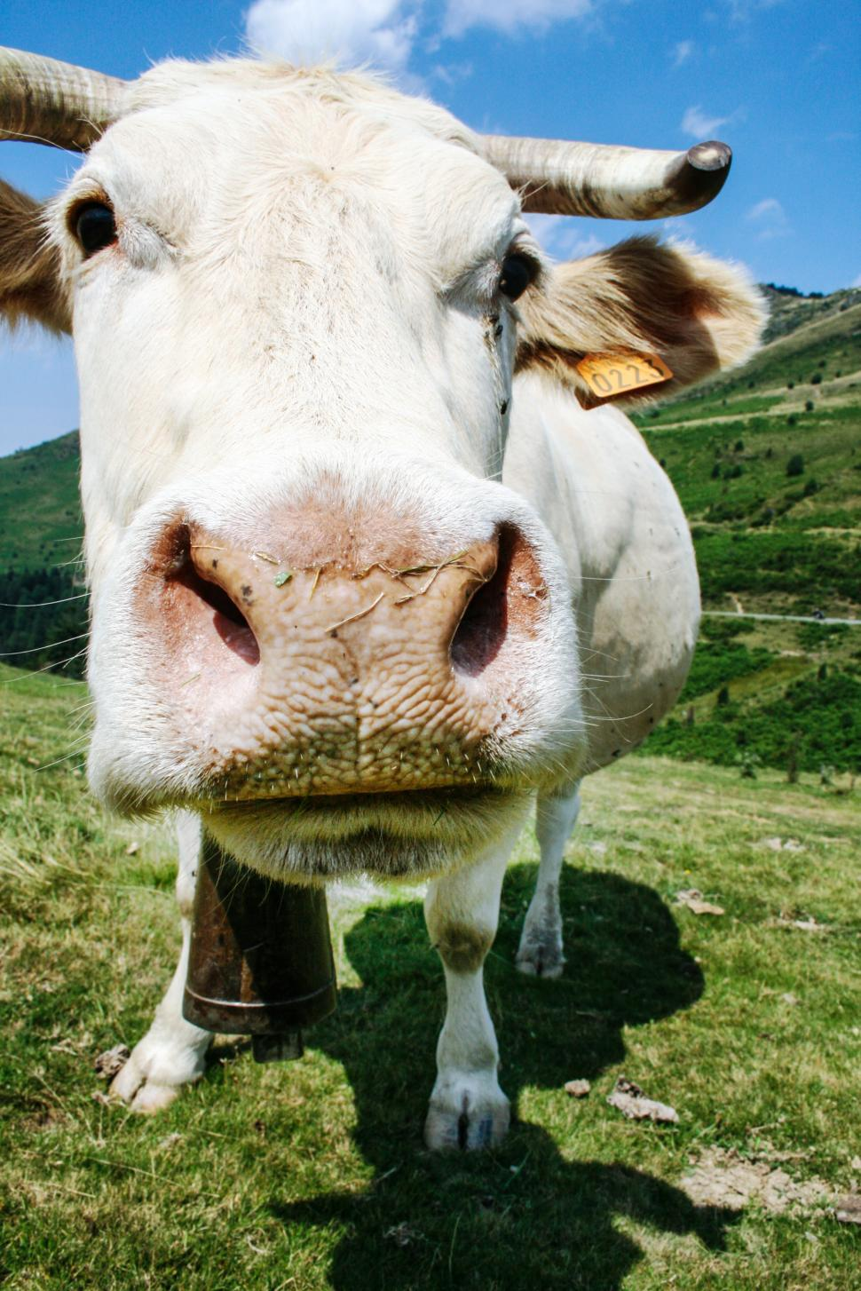Download Free Stock HD Photo of The Cow on grass Online