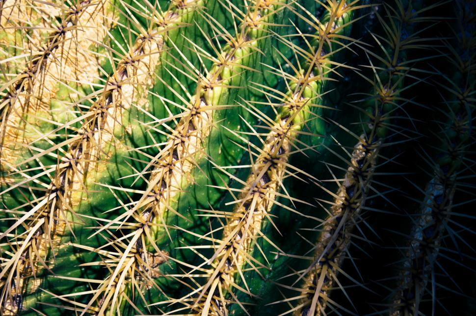 Download Free Stock HD Photo of Close up of globe shaped cactus Online