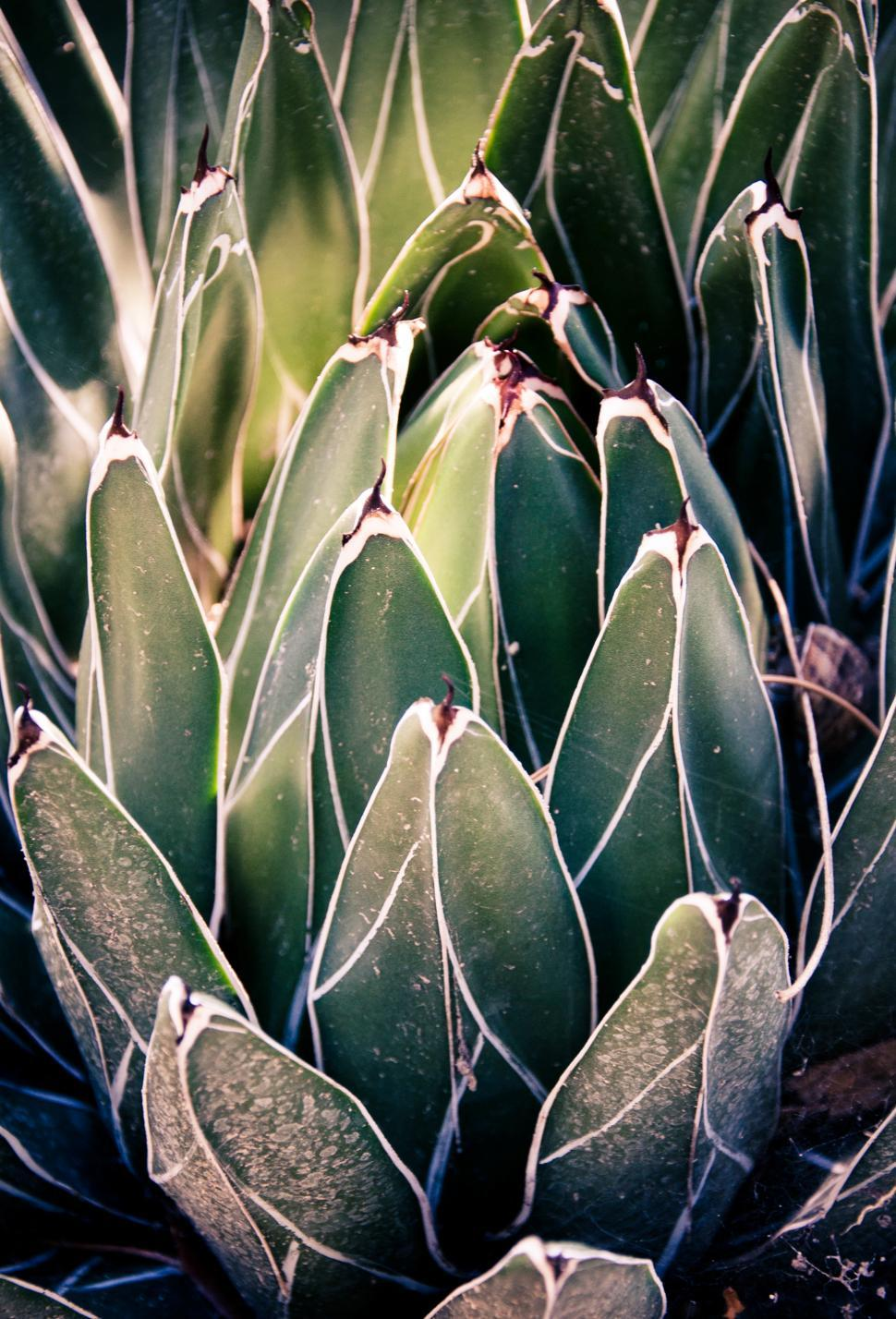 Download Free Stock HD Photo of Sharp pointed agave cactus Online