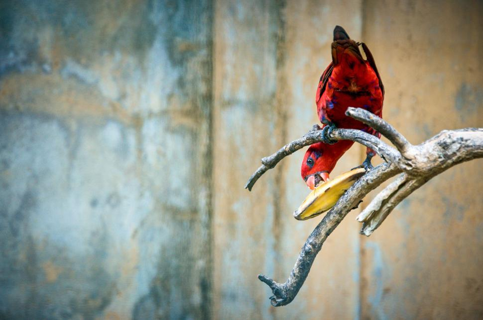 Download Free Stock HD Photo of Red parrot bird Online