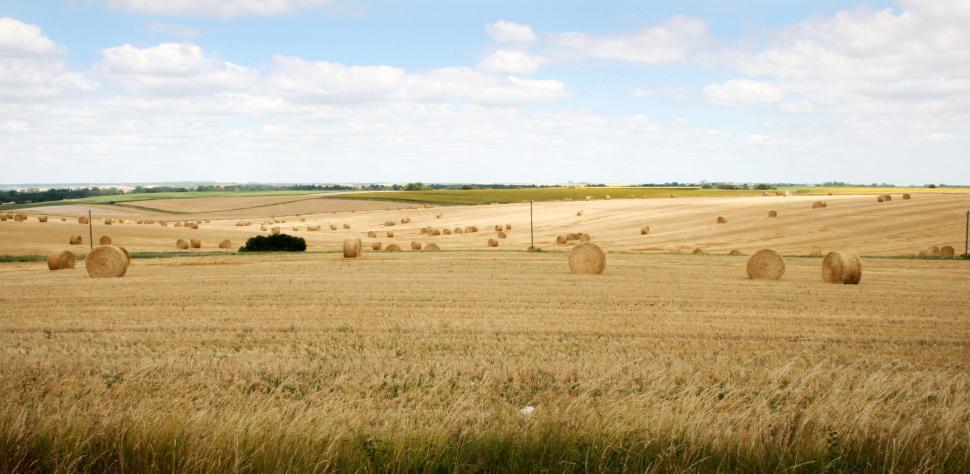 Download Free Stock HD Photo of Wheat field landscape Online