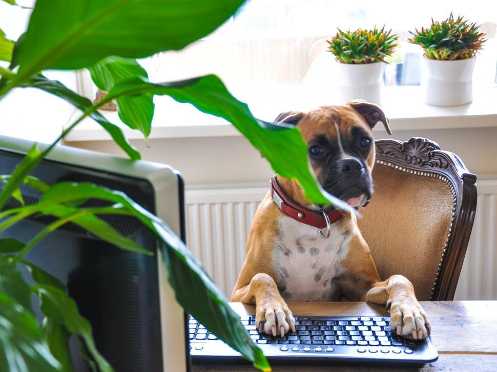 Free image of dog behind computer