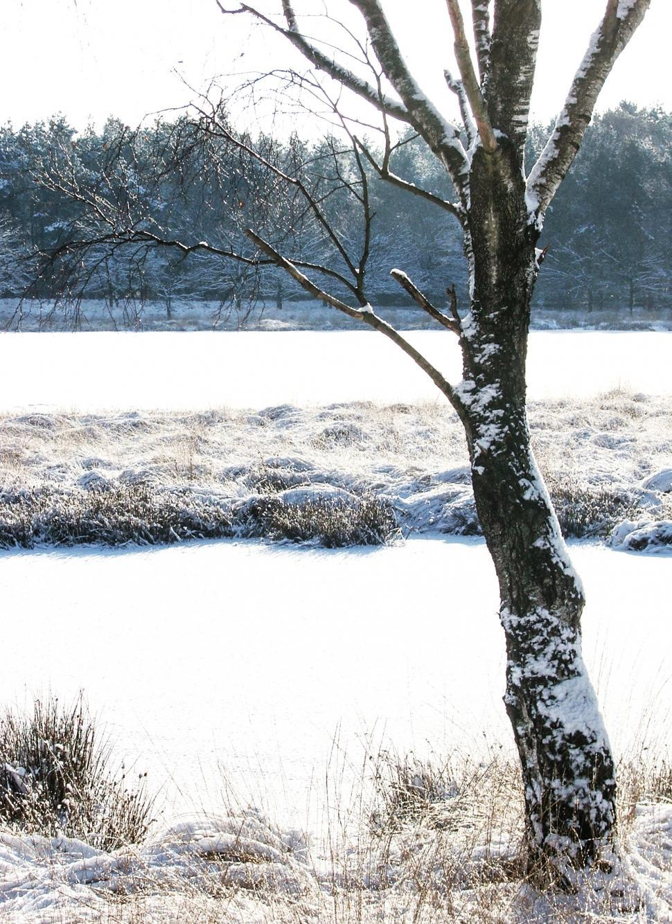 Download Free Stock HD Photo of winter trees on snow Online