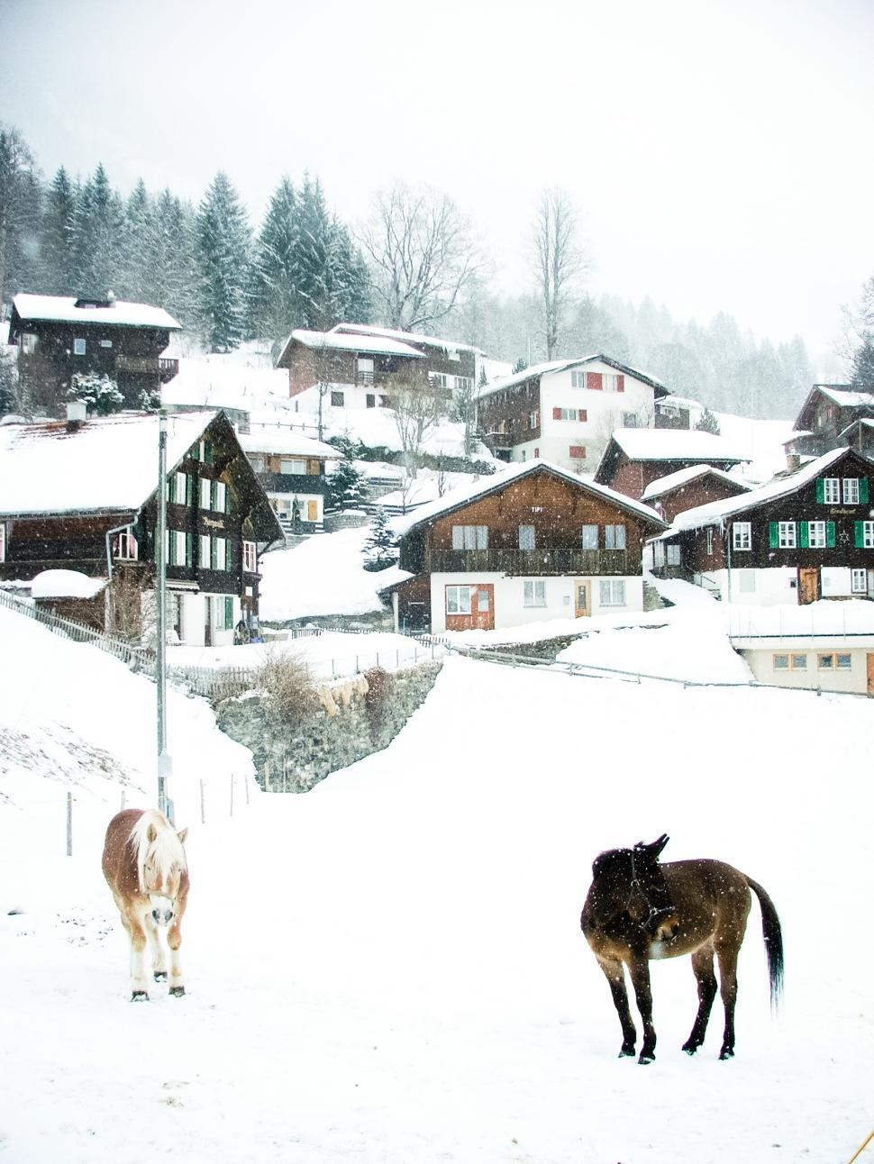 Download Free Stock HD Photo of Snowy village and horses Online