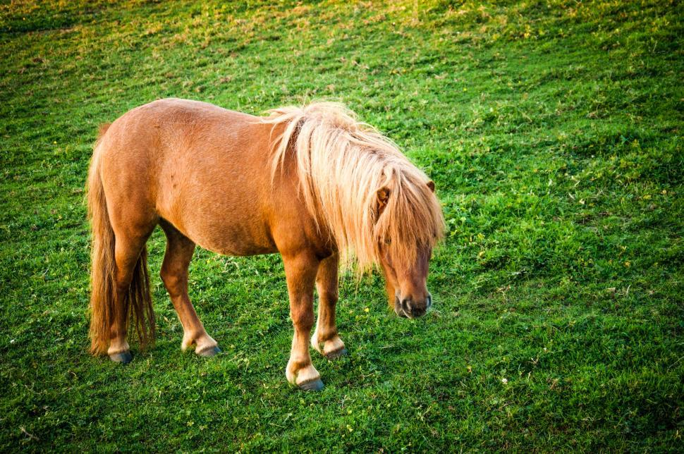 Download Free Stock HD Photo of Brown horse on spring meadow  Online