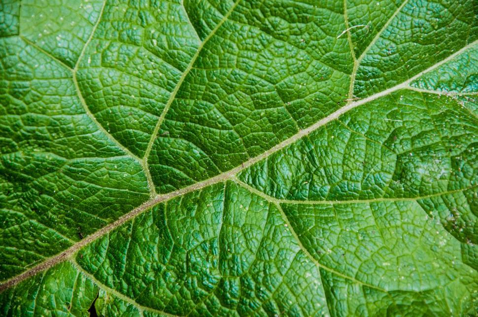 Download Free Stock HD Photo of Leaf texture close up Online