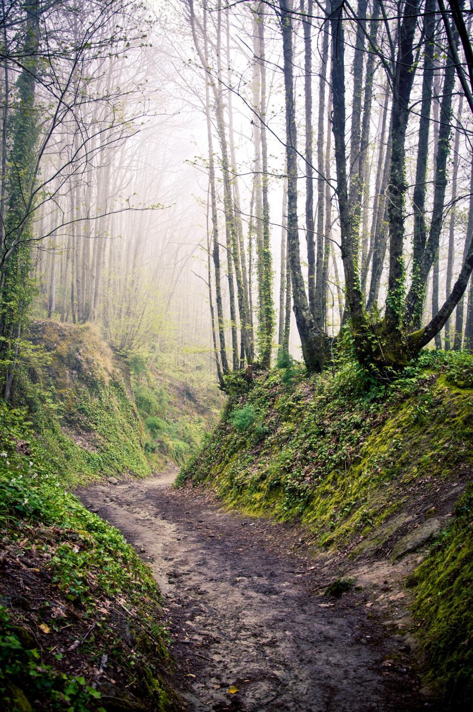 Download Free Stock HD Photo of Walking path in forest with morning mist Online