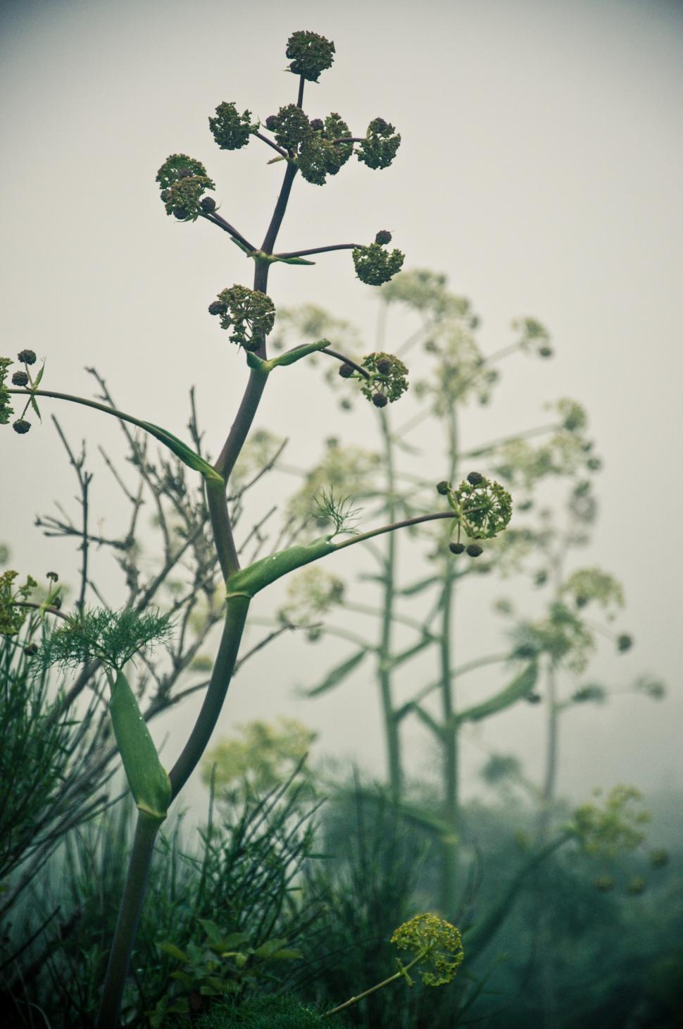 Download Free Stock HD Photo of Plants in the mist Online