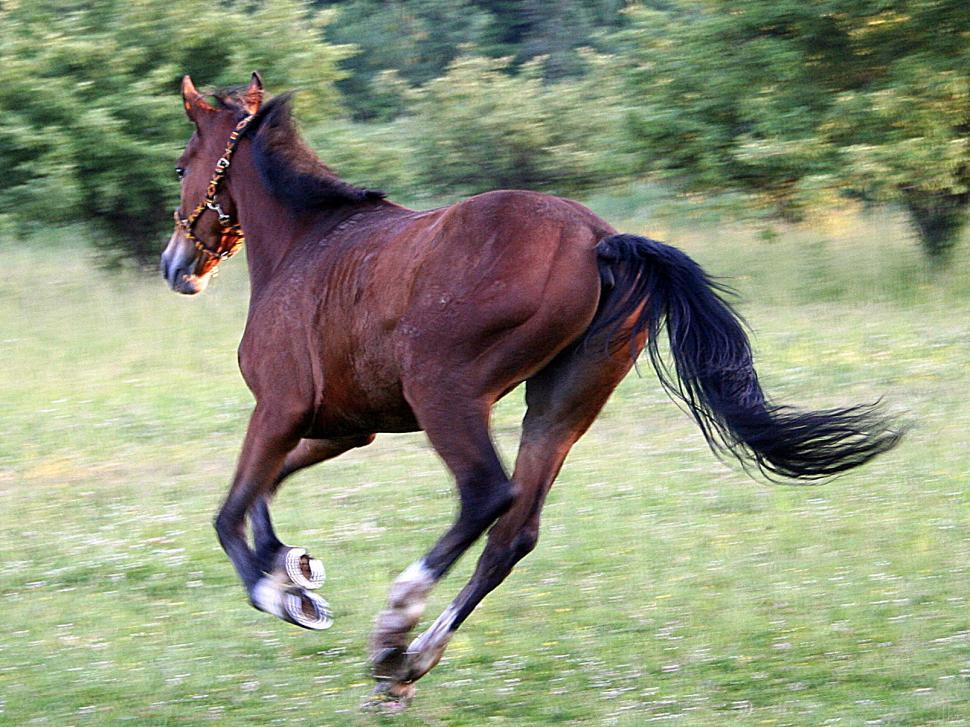Download Free Stock HD Photo of Horse running Online