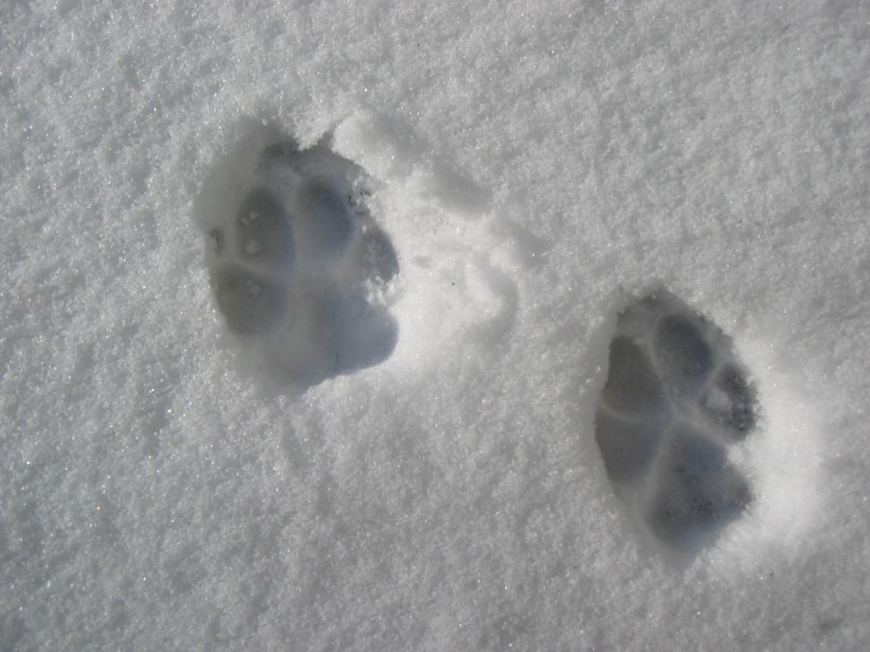 Download Free Stock HD Photo of Cat prints in snowcat prints in snow Online
