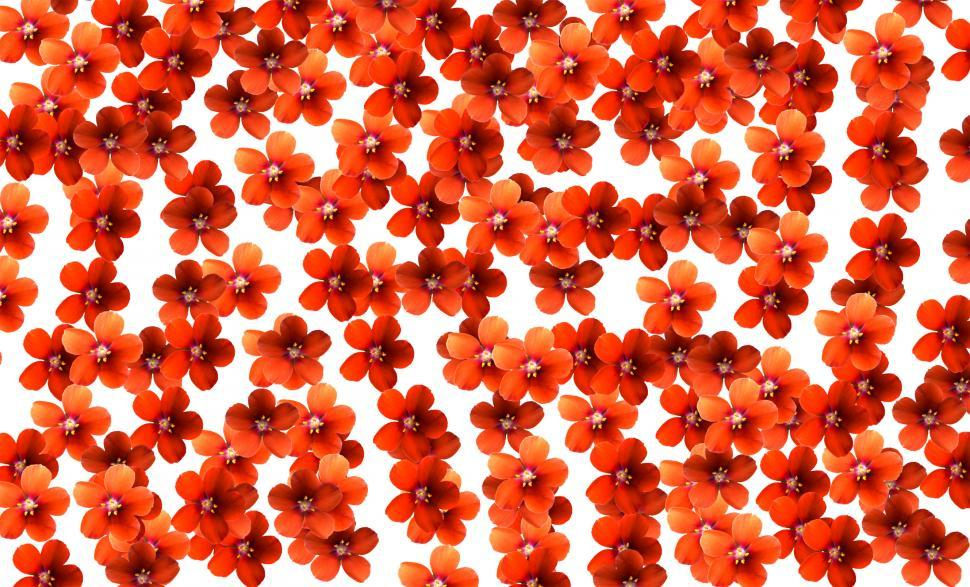 Download Free Stock HD Photo of Orange Flowers on White Online