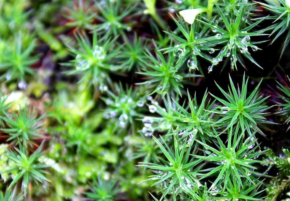 Download Free Stock HD Photo of Macro of dew drops on moss Online
