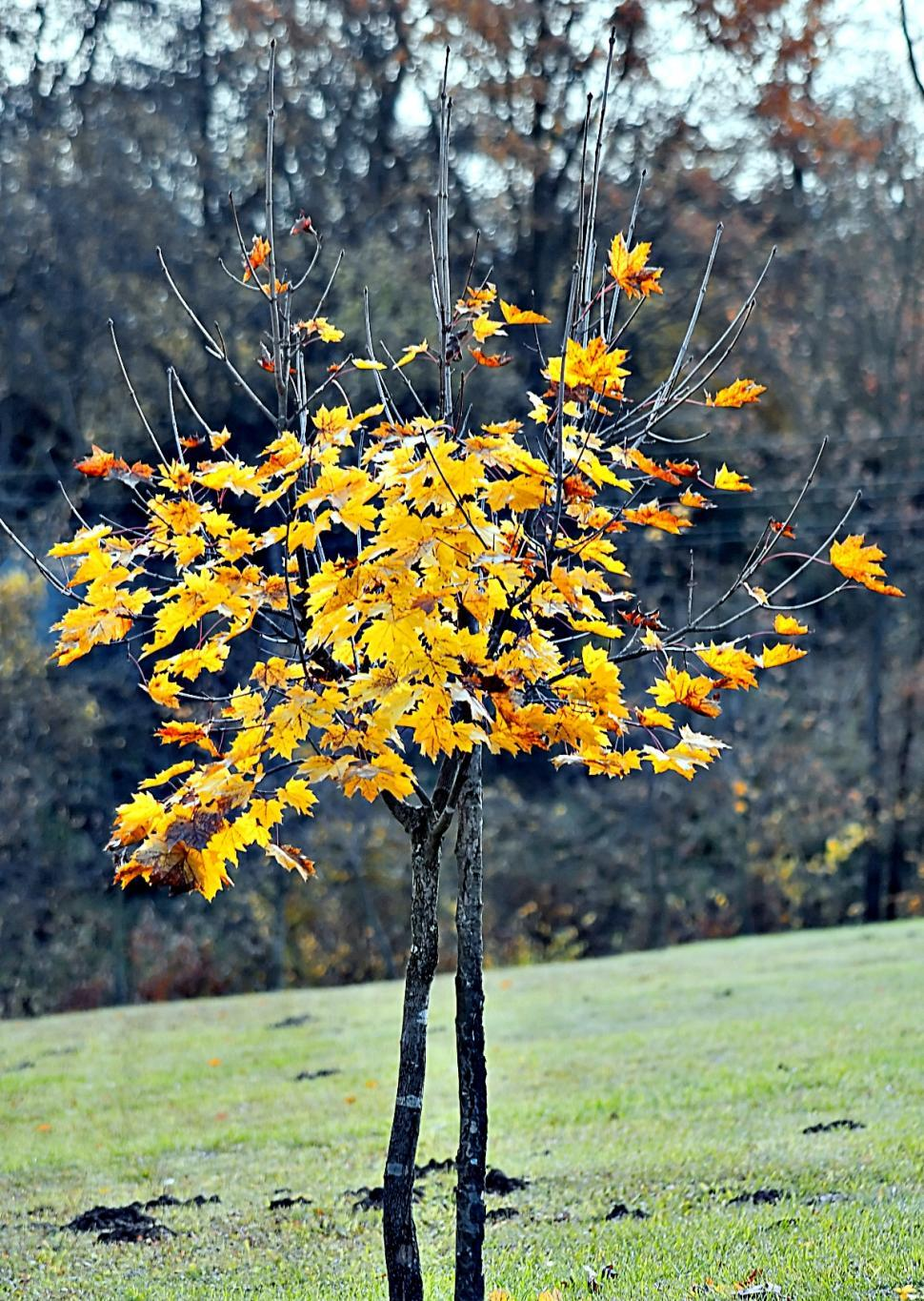 Download Free Stock HD Photo of Autumn tree Online