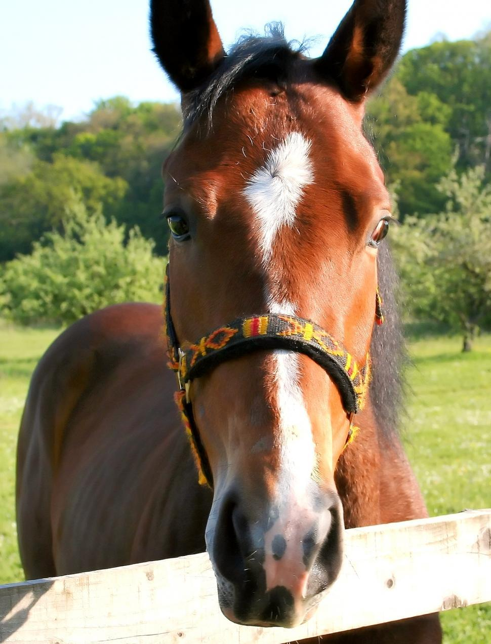 Download Free Stock HD Photo of Horse portrait Online