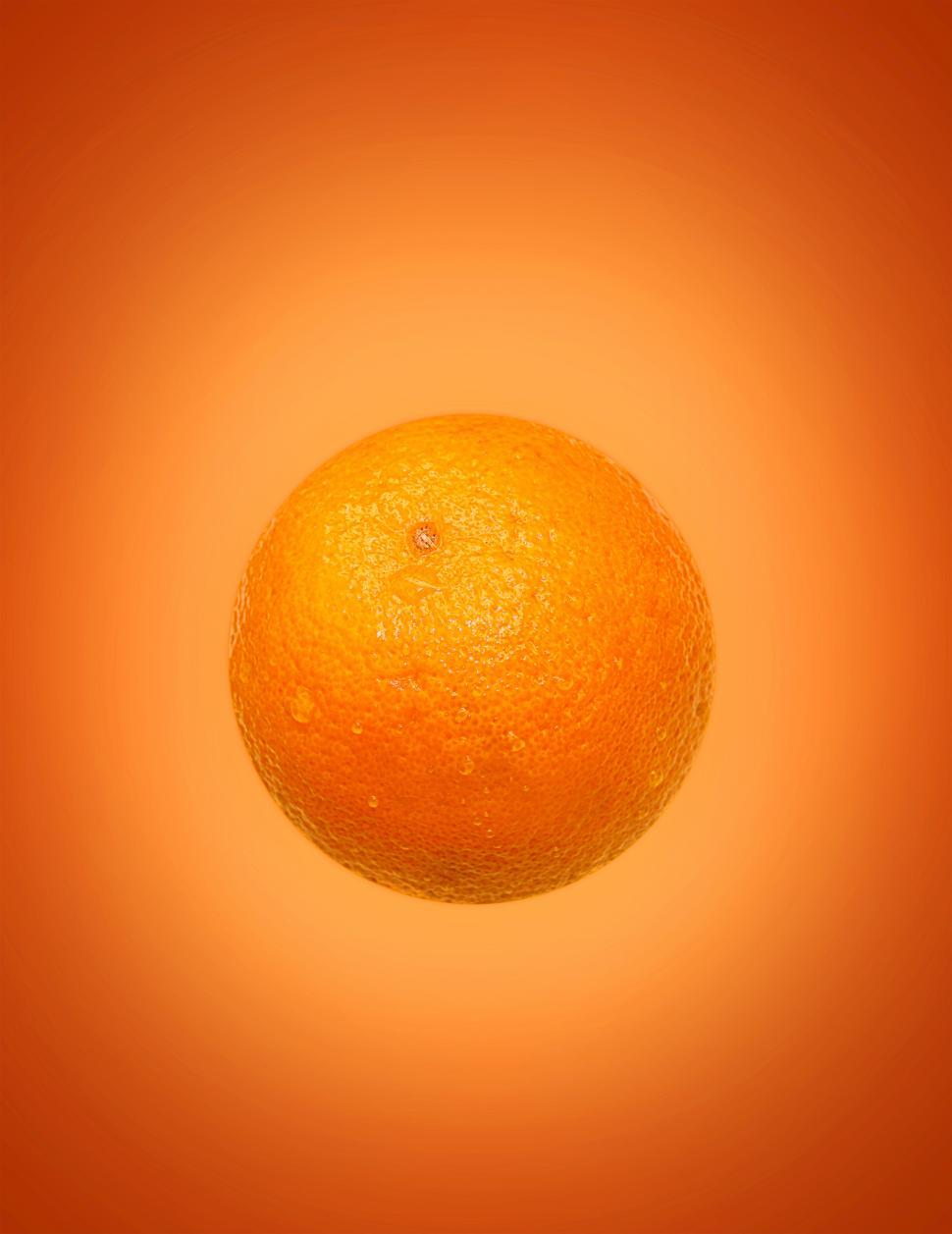 Download Free Stock HD Photo of Orange on Orange Online