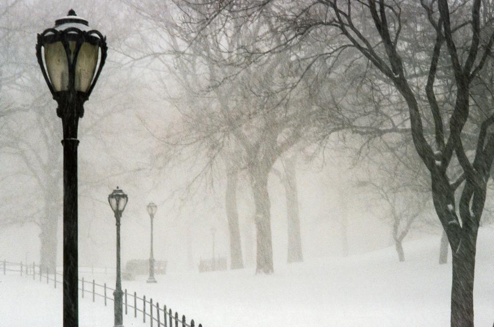 Download Free Stock HD Photo of Central Park in the snow Online