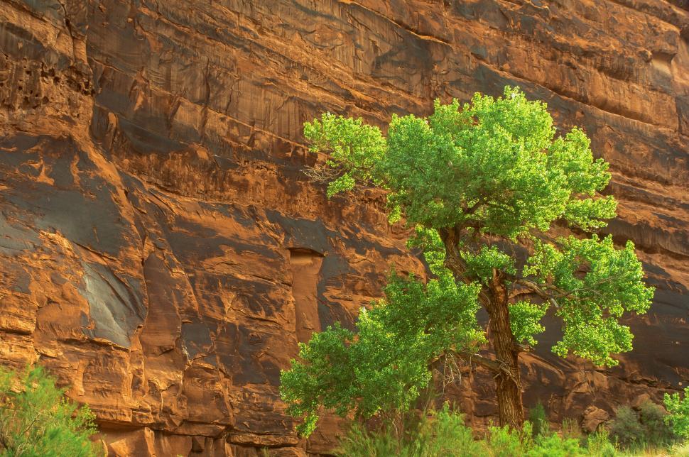 Download Free Stock HD Photo of Kane Creek Canyon in Utah Online