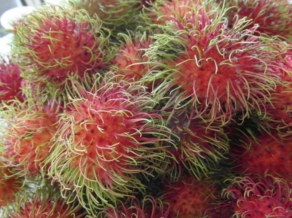 Download Free Stock HD Photo of Rambutan Fruits  Online