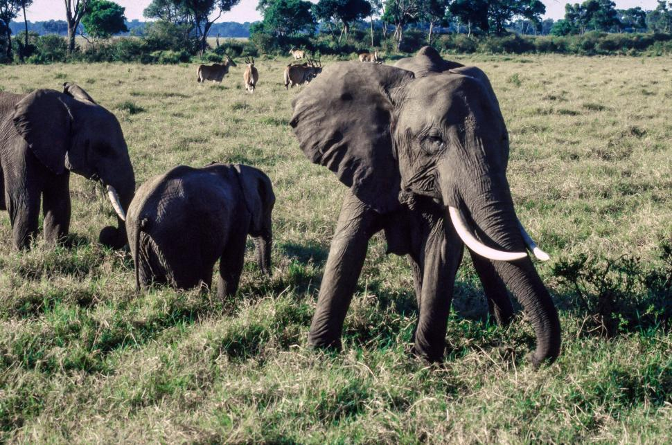 Download Free Stock HD Photo of Elephants in Maasai Mara National Reserve, Kenya Online