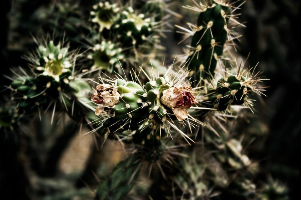Download Free Stock HD Photo of Desert Cactus Online