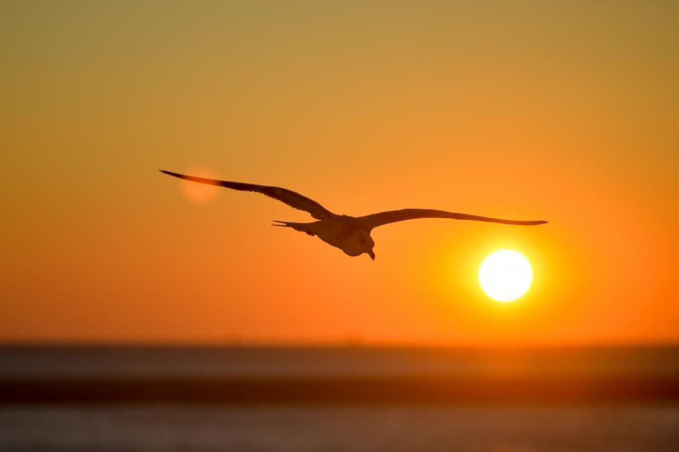 Download Free Stock HD Photo of Seagull at sunset Online
