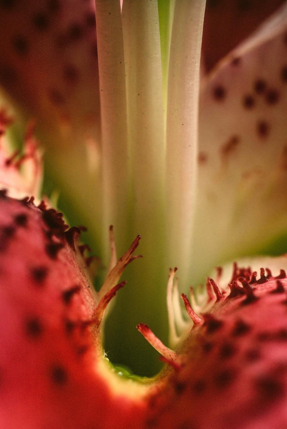 Download Free Stock HD Photo of Day-lily Stamen Online