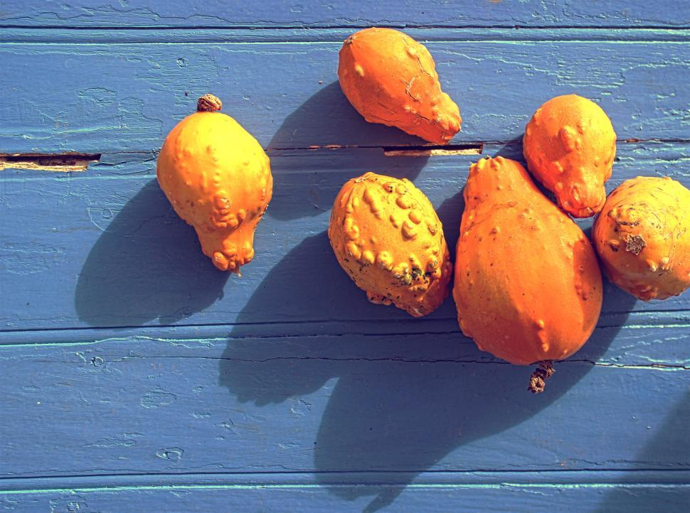 Download Free Stock HD Photo of Organic colorful pumpkins on blue wooden background Online