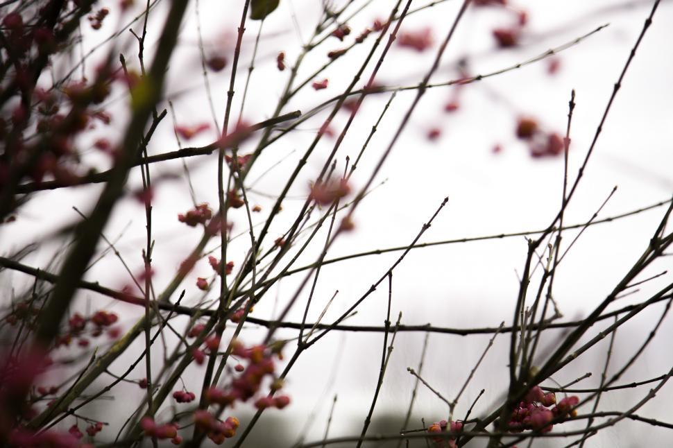 Download Free Stock HD Photo of Close up of magnolia tree branches Online