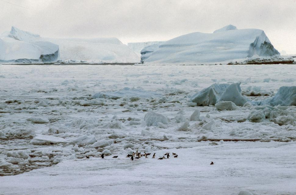 Download Free Stock HD Photo of Floating Icebergs Online