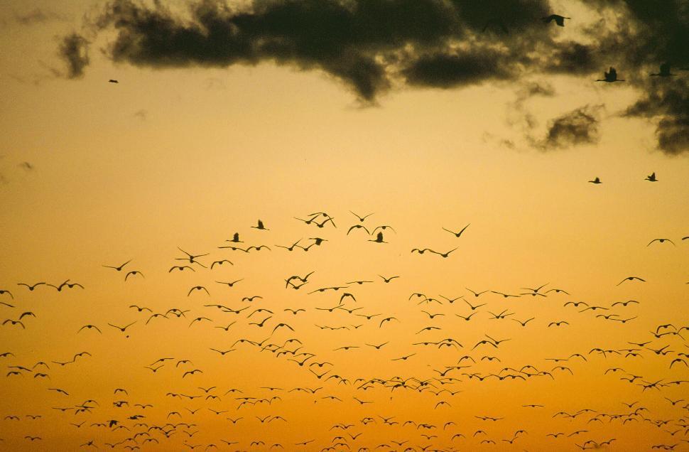 Download Free Stock HD Photo of Flock of birds Online