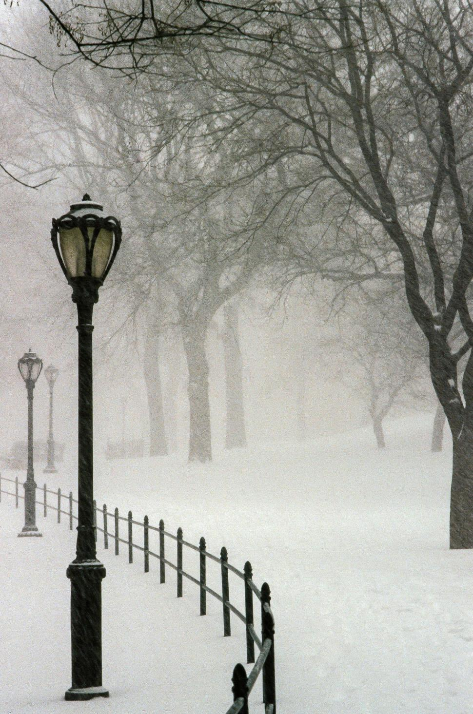 Download Free Stock HD Photo of Snow Fall Online