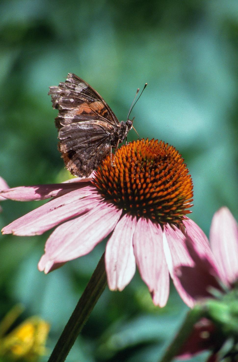 free stock photo of butterfly freerange stock