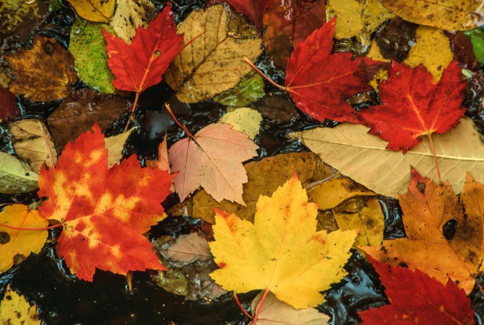 Download Free Stock HD Photo of Autumn Leaves Online