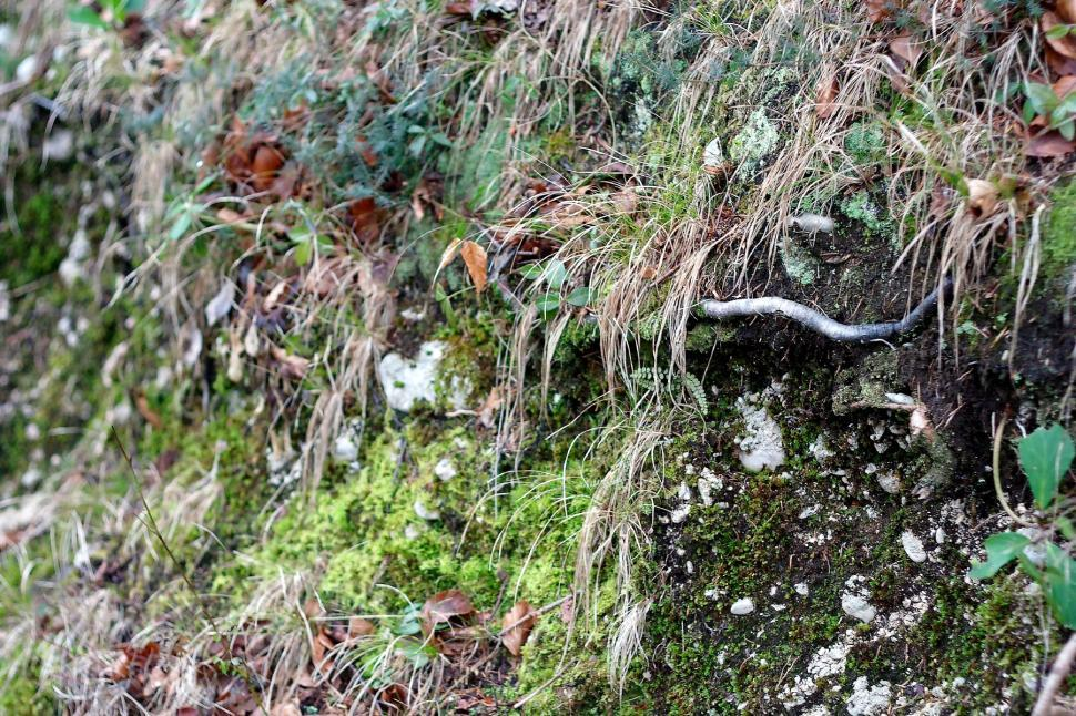 Download Free Stock HD Photo of Grass, moss and roots Online