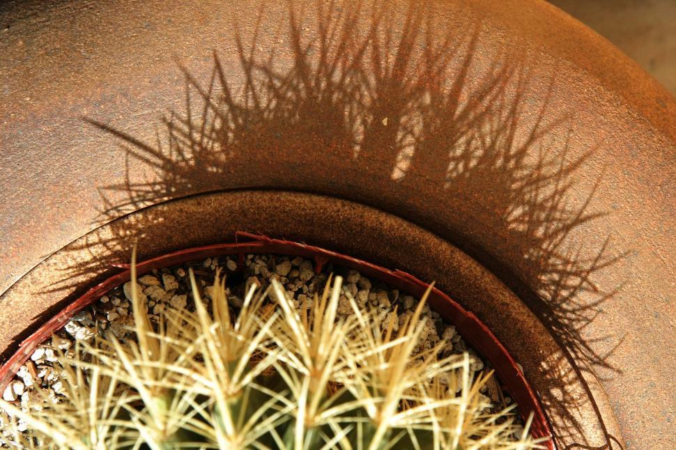 Download Free Stock HD Photo of Cactus shadow Online