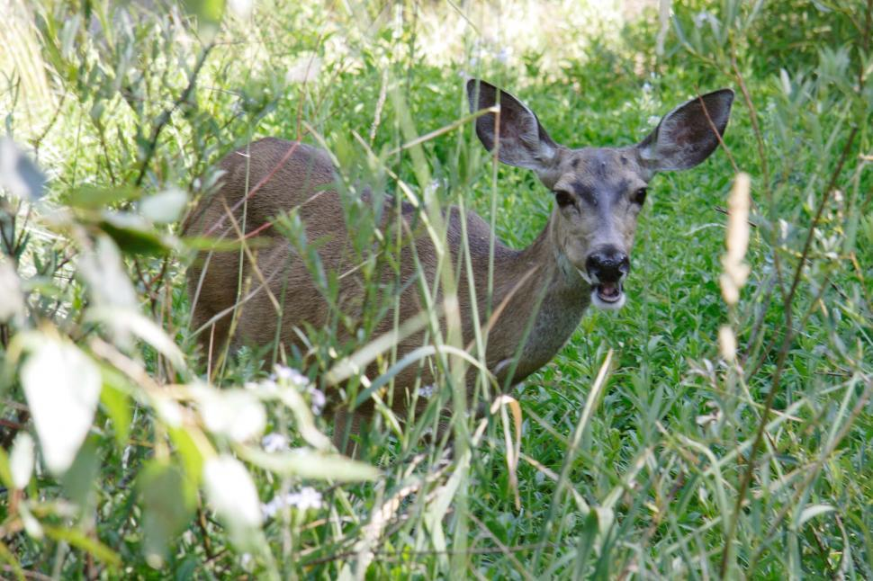 Get Free Stock Photos of Deer in the forest Online | Download Latest