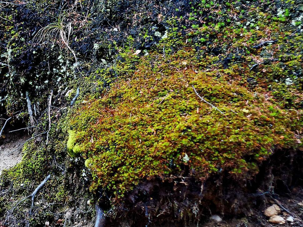 Download Free Stock HD Photo of The moss Online