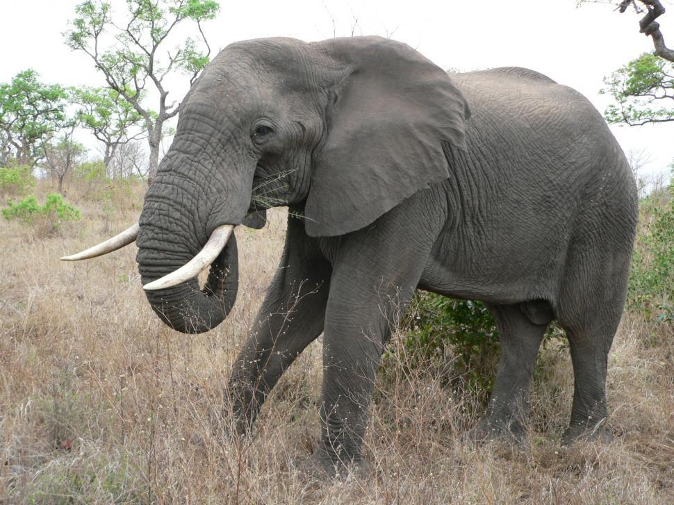 Download Free Stock HD Photo of Elephant in South African Game Reserve Online