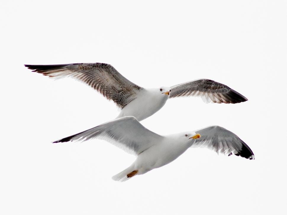 Download Free Stock HD Photo of Seagulls Formation flying Online