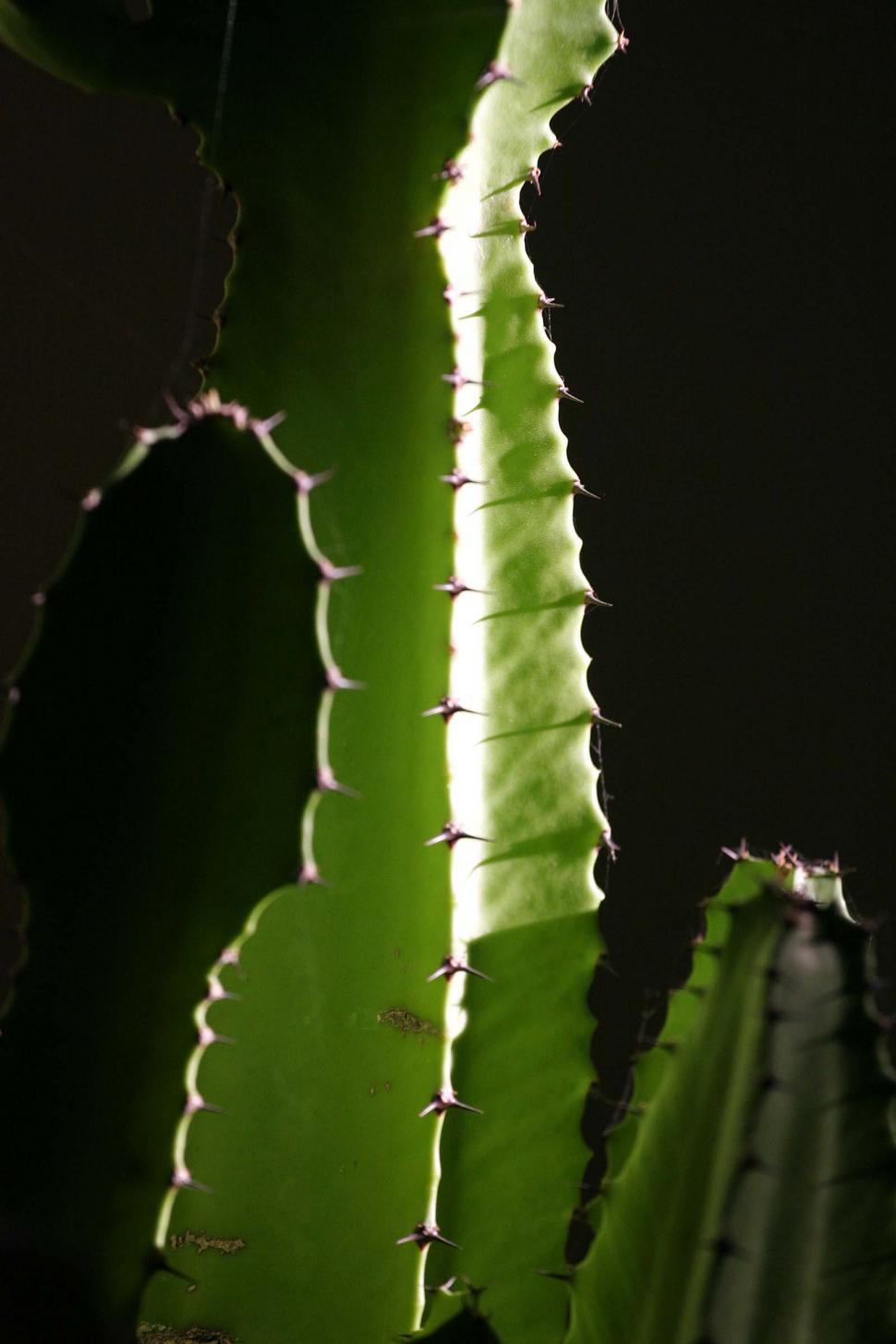 Download Free Stock HD Photo of Dark cactus detail Online