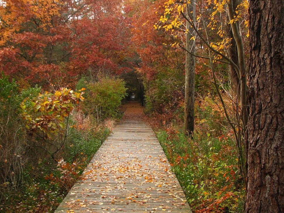 Free image of wooden path between a fall scene