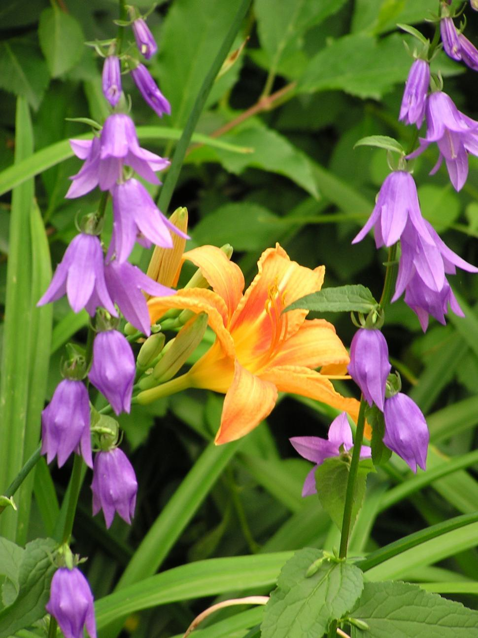 Download Free Stock HD Photo of Purple and Orange Flowers in Bloom Online