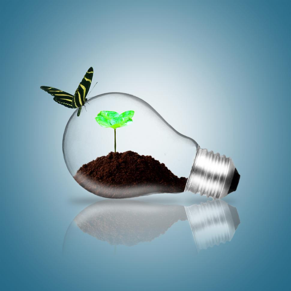 Download Free Stock HD Photo of Lightbulb with butterfly and plant sprout Online